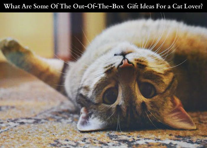 What Are Some Of The Out-Of-The-Box Gift Ideas For a Cat Lover?