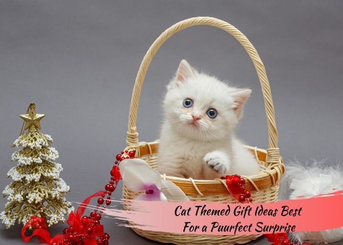 Cat Themed Gift Ideas Best For a Puurfect Surprise