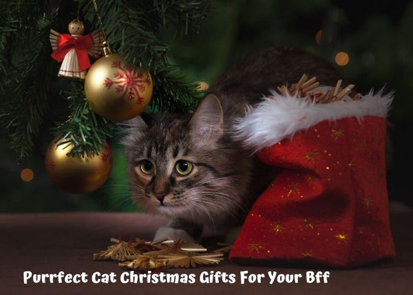 Purrfect Cat Christmas Gifts For Your Bff