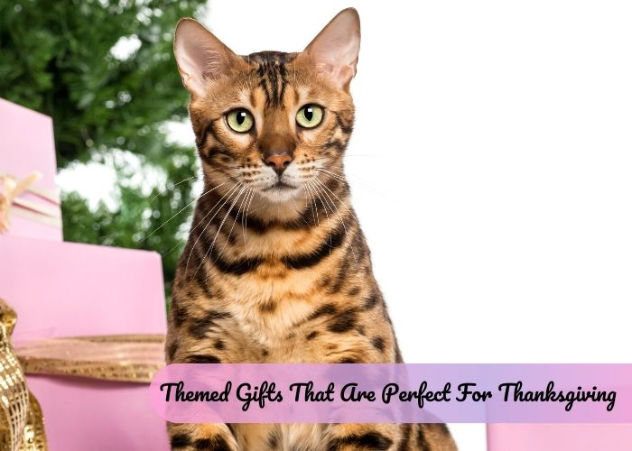 Cat-Themed Gifts That Are Perfect For Thanksgiving