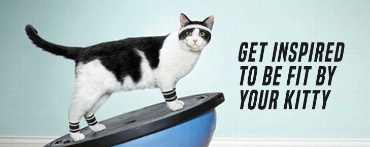 Draw Inspiration from These Cat Fitness Merchandise and Be Agile and Nimble!