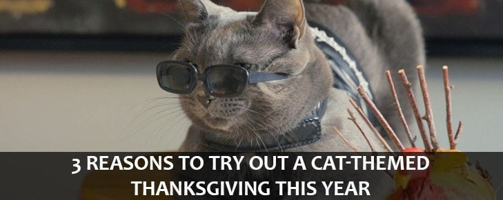 3 Reasons to Try Out a Cat-Themed Thanksgiving This Year