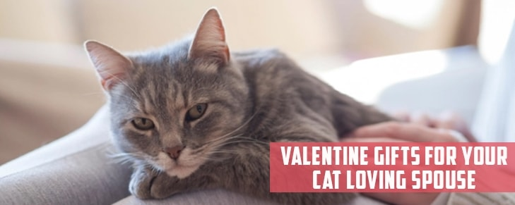 4 Valentine's Day Gift for Your Cat Loving Spouse