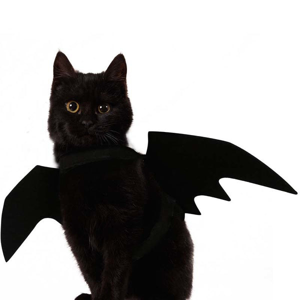 The Black Bat Wings Costume