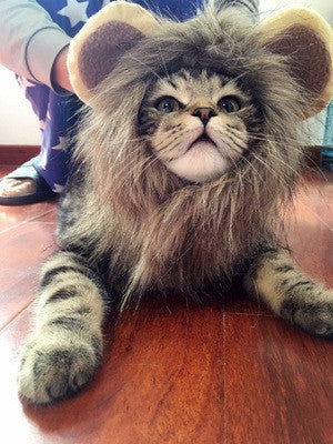 I Feel Like a Lion Today Cat Costume