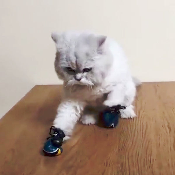 Crazy Cat Boxing Gloves