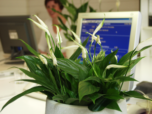 Can flowers be used to improve your business?