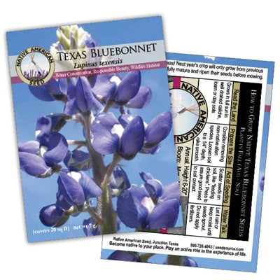 Growing The Native Texas Bluebonnet Flower in Your Garden