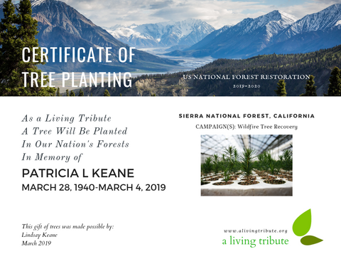 Plant-a-Tree Gift with E-Certificate