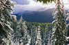 Plant a Tree in a US National Forest with Mailed Holiday Card