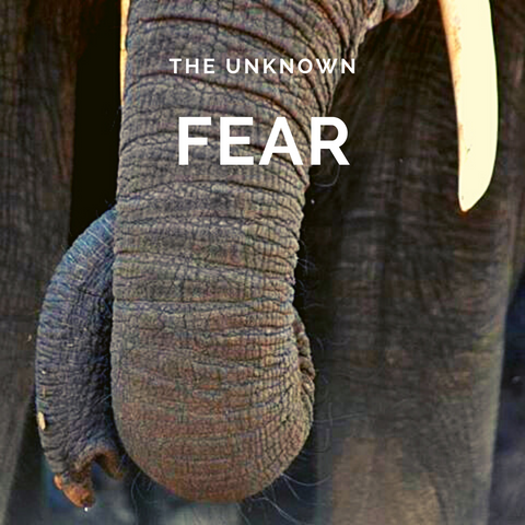 The Fear Unknown