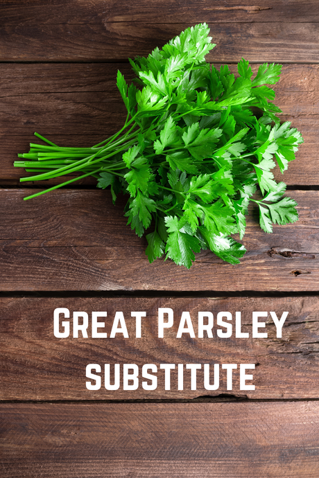 Great Parsley Substitute