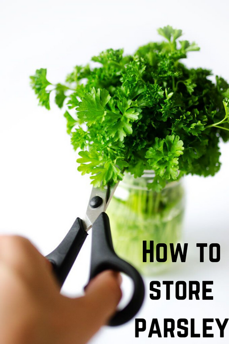 Storing Parsley -  How  to Store Parsley