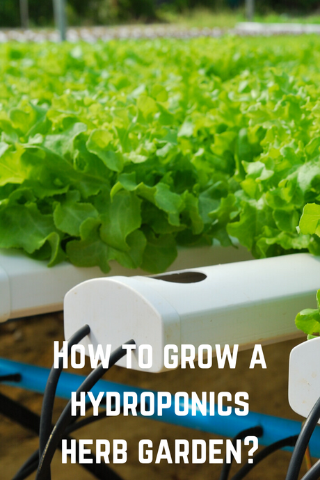 How to Grow a Hydroponics Herb Garden?