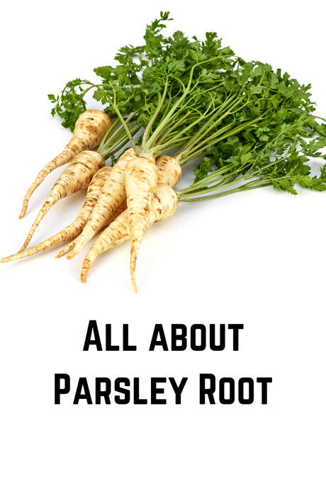 All about Parsley Root