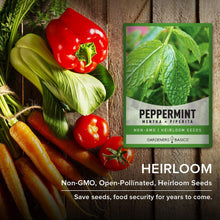 Load image into Gallery viewer, Peppermint Seeds for Planting is A Heirloom, Open-Pollinated, Non-GMO Herb Variety- Great for Indoor and Outdoor Gardening and Herbal Tea Gardens by Gardeners Basics
