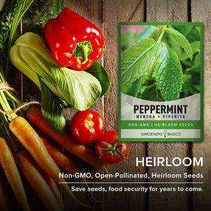 Peppermint Seeds for Planting is A Heirloom, Open-Pollinated, Non-GMO Herb Variety- Great for Indoor and Outdoor Gardening and Herbal Tea Gardens by Gardeners Basics