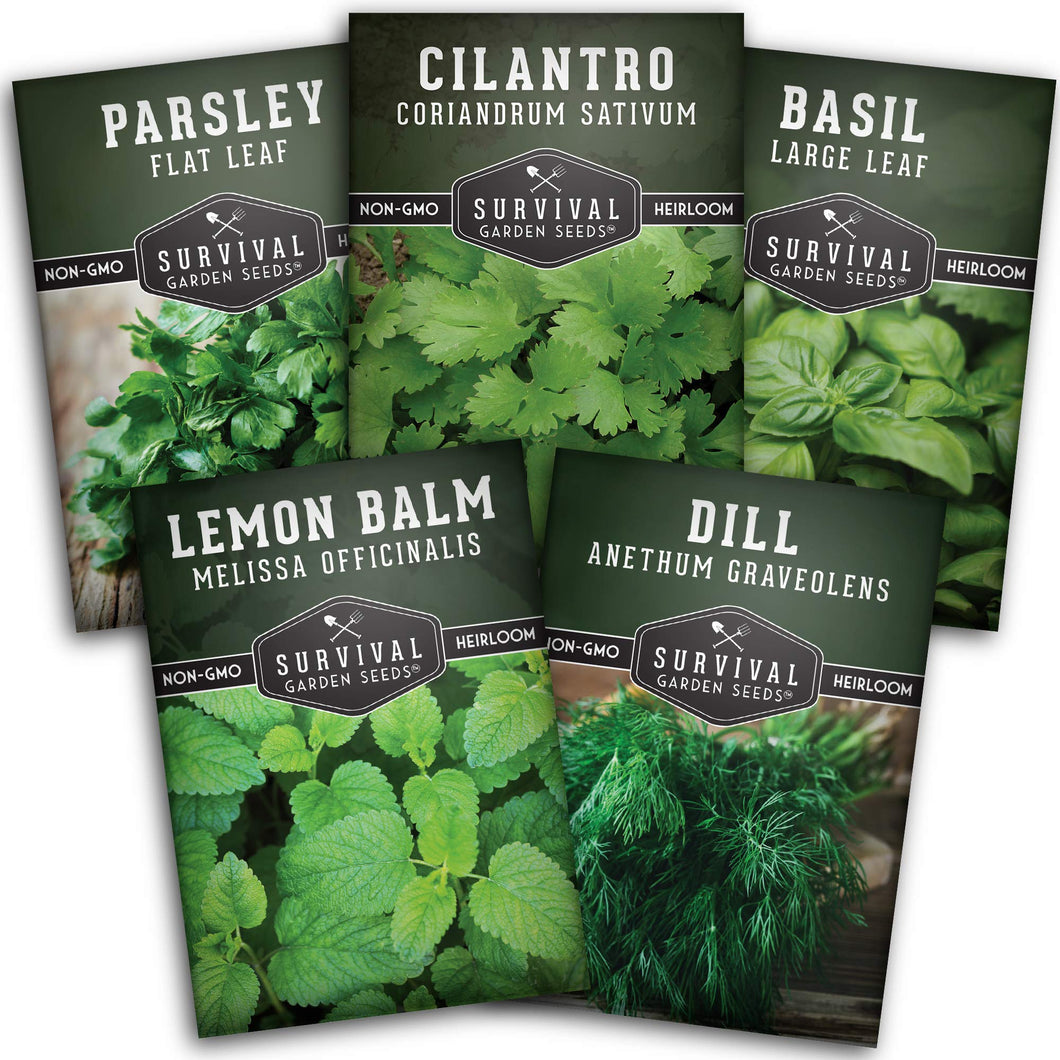 Survival Garden Seeds Herb Collection Seed Vault - Parsley, Cilantro, Basil, Lemon Balm, Dill - Non-GMO Heirloom Survival Garden Seeds for Planting - Grow Herbs Indoors Year Round