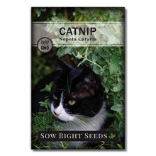 Load image into Gallery viewer, Sow Right Seeds - Catnip and Cat Grass Seed Collection for Planting Indoors or Outdoors, Includes The Popular herb Seed Catnip and Cat Grass (100% Sweet Oat Grass), Non-GMO Heirloom Seed, Wonderful G