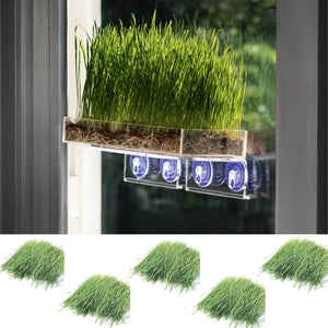 Window Garden Double Veg Ledge Shelf Organic Wheatgrass Kit Bundle (5) -Enough Pre-Measure Seeds, Fiber Soil to Grow 5 Trays on Your Indoor Window. Superfood Healthy Benefits for You and Your Cat. Organic Wheatgrass Bundle w/Double Veg Ledge