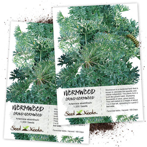 Seed Needs, Wormwood Herb (Artemisia Absinthium) Twin Pack of 500 Seeds Each Non-GMO