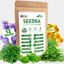 Load image into Gallery viewer, SEEDRA 12 Herb Seeds Variety Pack Indoor and Outdoor Planting - 3500+ Seeds - Non GMO and Heirloom - Basil, Thyme, Lavender, Sage, Parsley, Chives, Rosemary, Tarragon, Oregano, Fennel, Mint, Cilantro