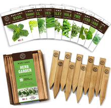 Load image into Gallery viewer, Herb Garden Seeds for Planting - 10 Culinary Herb Seed Packets Kit, Non GMO Heirloom Seeds, Plant Markers, Wood Gift Box - Home Gardening Gifts for Gardeners