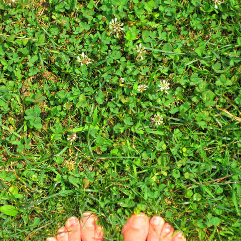 Green Genies Ecological Cleaning Service loves to feel the grounding power of mother earth when we stand barefoot on a soft patch of grass. It is so important to connect to this world, and letting our soles caress the ground is a great way to physically connect our energies. Of course always be tick smart, but get your toes in the grass, dear birds!