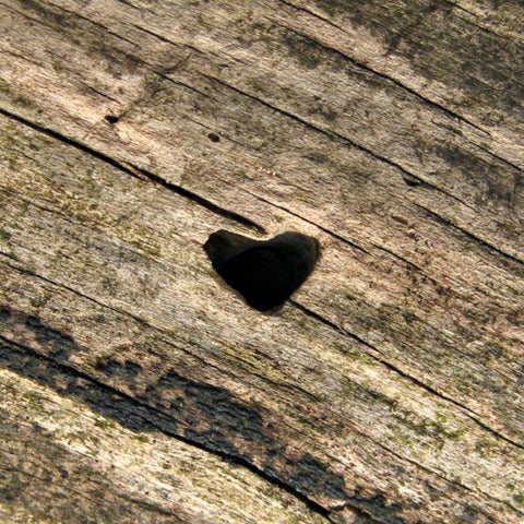 Tidy Thyme 100% Plant-Based Home and Cleaning found this charming little heart in the bark of a tree!