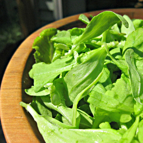 Green Genies Eco-friendly Cleaning Service is so excited to harvest home-grown lettuce for salads! Gardening is so great!