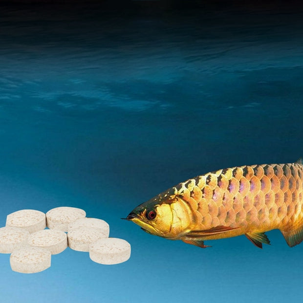 Aquarium Probiotics Digestion Capsule