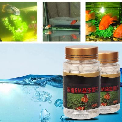 aquarium pond clean water probiotic bacteria