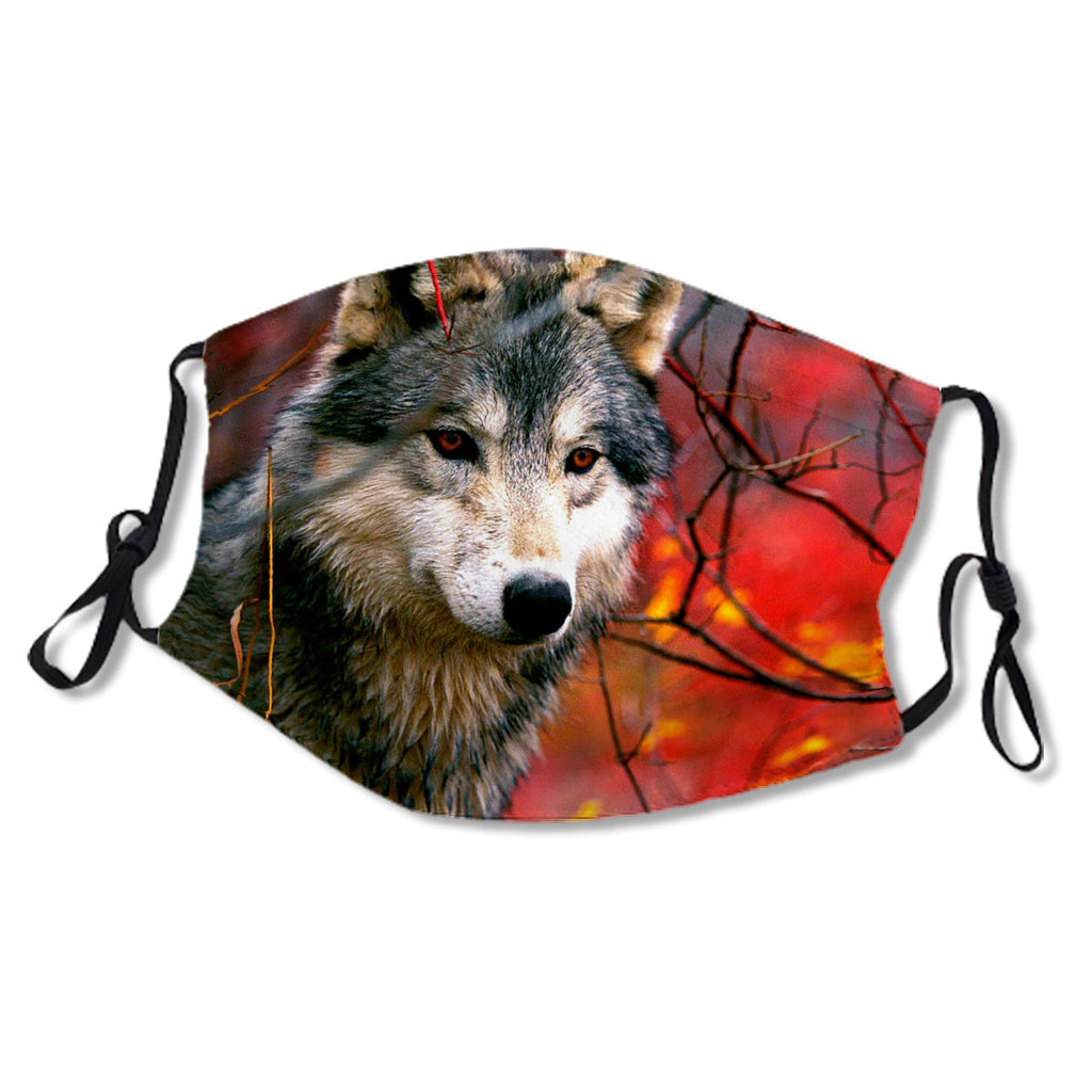 Grey Wolf In Beautiful Red And Yellow Foliage No. LU78VU