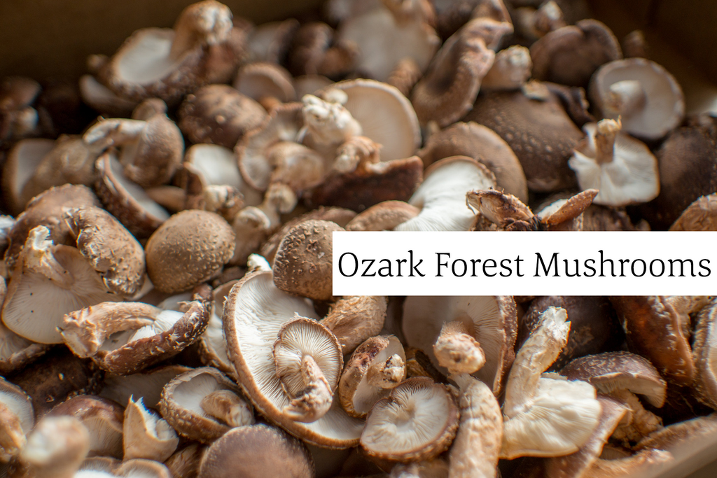 Ozark Forest Mushrooms