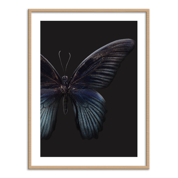 Black Butterfly on Grey