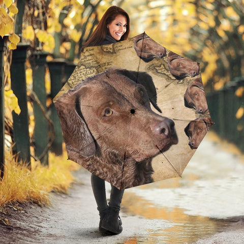 Chesapeake Bay Retriever Print Umbrellas