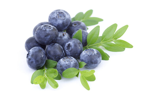 American blueberry