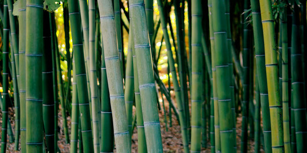 Why we believe in bamboo