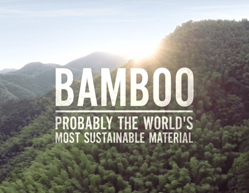 A Small Tribute to Bamboo