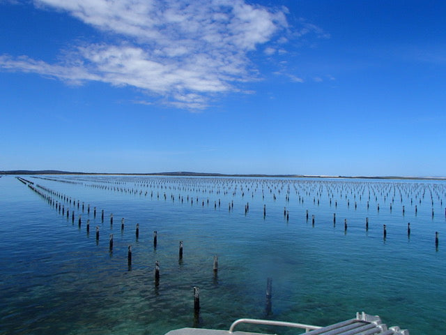 coffin-bay-little-douglas-coffin-bay-oysters