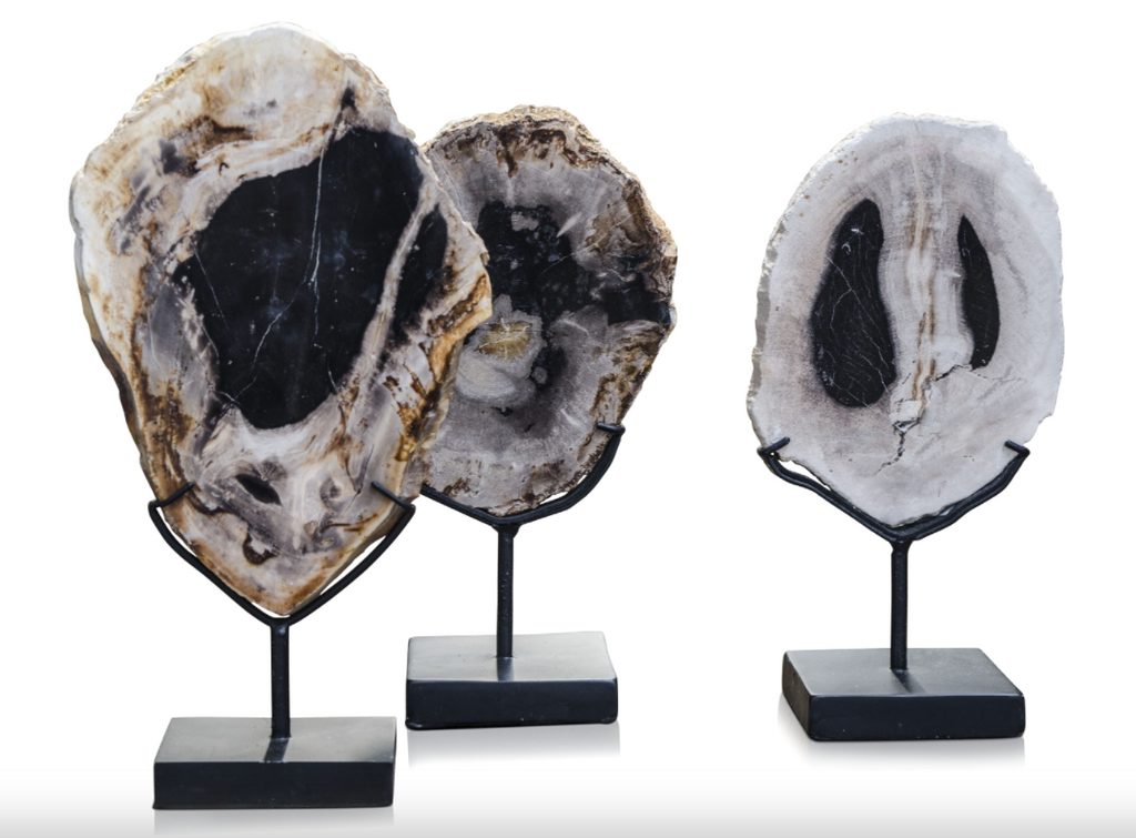 Three Slices of petrified wood on stands