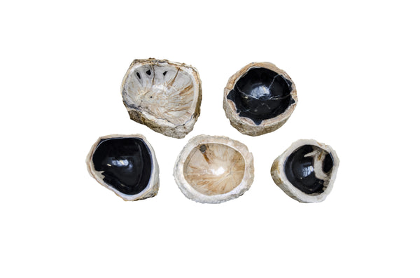 Top View of Petrified Bowls