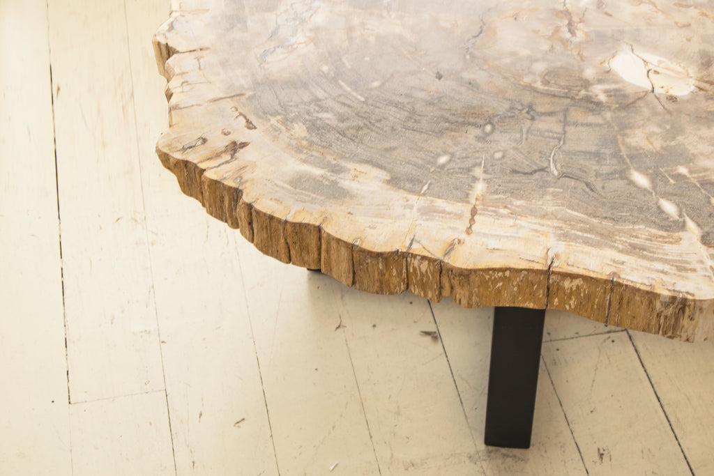 Detail of petrified coffee table