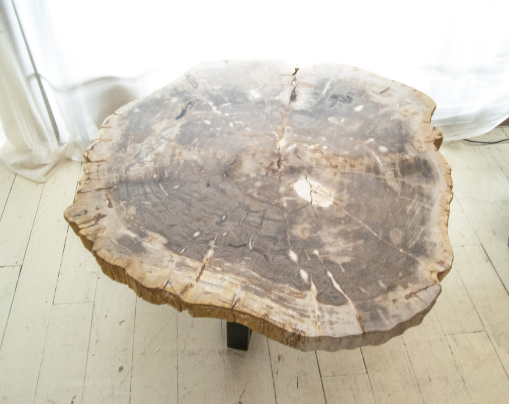Top of Petrified coffee table