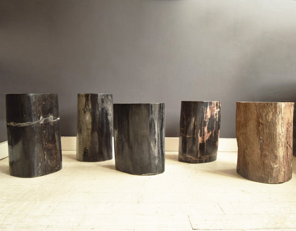 Petrified wood stools in a line