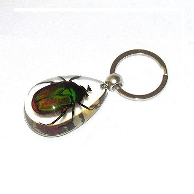 A keychain with a real green chafer beetle encased in acrylic.