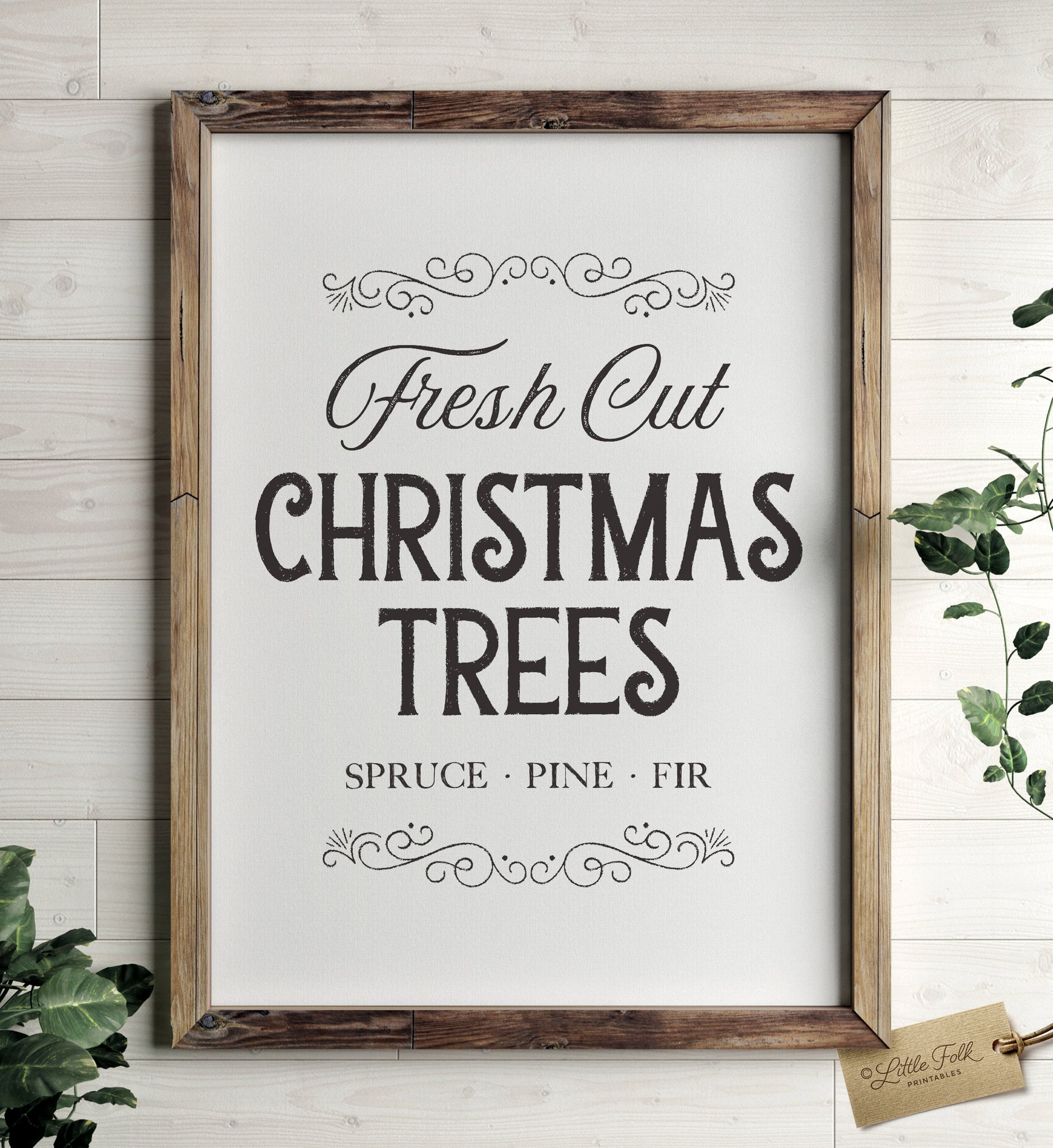 Fresh Cut Christmas Trees Print