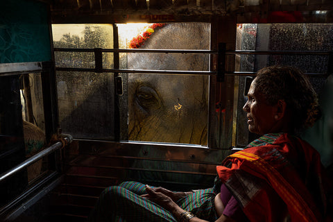Harsha Vadlamani - An Elephant In India, 2018