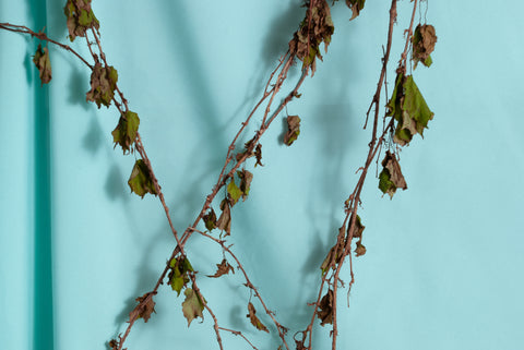 Elizabeth LoPiccolo - untitled, vine #4, 2020