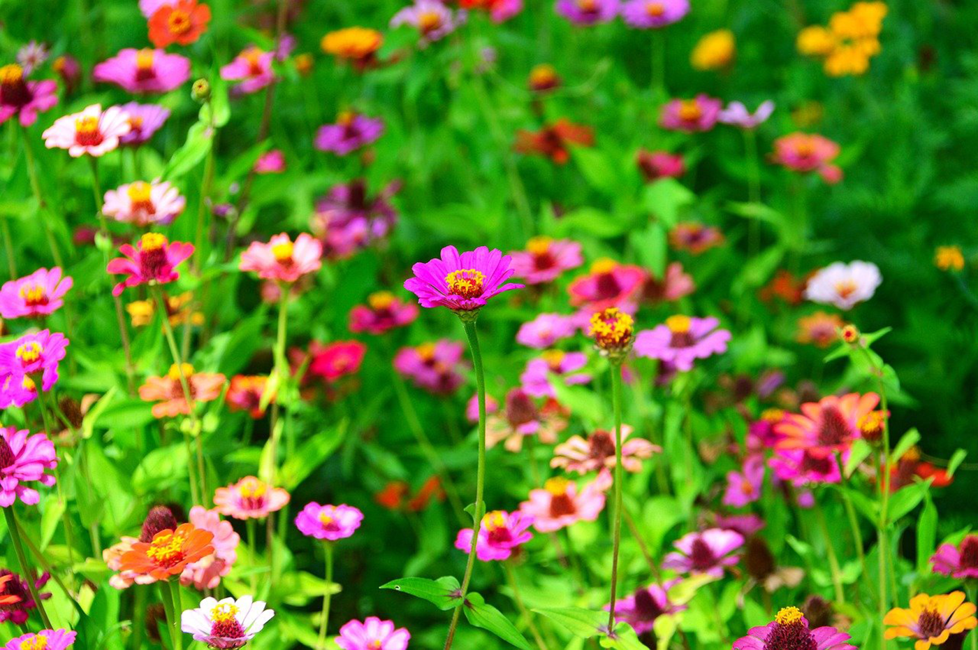 6 Summer Flowers That Will Transform Your Garden